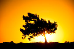 Silhouette of a tree in the rays of the rising sun Royalty Free Stock Photos