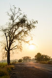 Silhouette of tree and road at sunrise Stock Photo