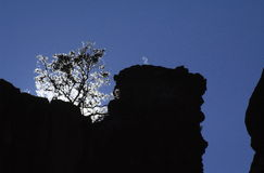 Silhouette of tree and rocks. A view looking upwards to the top of a cliff where a tree and rocks are silhouetted in the bright sun against a blue, cloudless sky Stock Images