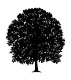Silhouette of Tree Royalty Free Stock Images