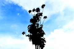 Silhouette of tree. With sky in the background Stock Photography