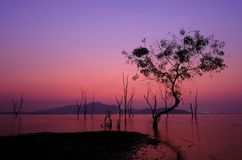 A Silhouette tree at somewhere reservoir in twilight time. Silhouette tree at somewhere reservoir in twilight time Royalty Free Stock Photo