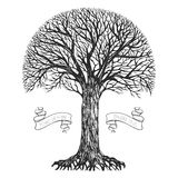 Silhouette of a tree. With a spherical crown. Vector illustration Stock Image