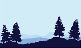 Silhouette of tree spruce on the hill landscape Royalty Free Stock Photos