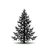 Silhouette tree spruce with shadow Royalty Free Stock Photo
