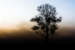 Silhouette of a tree. A tree stand in open field as the sun makers the morning fog glow around the tree Royalty Free Stock Images