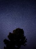 Silhouette of Tree during Starry Night Royalty Free Stock Image