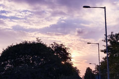 The silhouette of tree and street lamp with gradient purple sky Stock Image