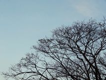Silhouette tree and street light post against blue sky. In evening blue sky Royalty Free Stock Photography
