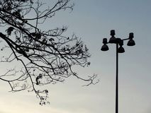Silhouette tree and street light post against blue sky. Urban scene Stock Photography