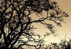 Silhouette of tree on sundown background Stock Photo