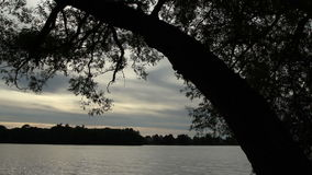 Silhouette of a tree at sundown. Silhouette of a tree trunk against a background of the lake at sundown stock footage