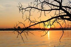 Silhouette tree on sunrise Royalty Free Stock Image