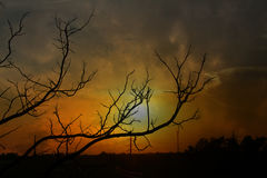Silhouette tree on sunrise Royalty Free Stock Image