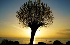 Silhouette of a tree at sunrise Stock Images