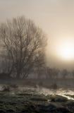 Silhouette tree sunrise fog Royalty Free Stock Image