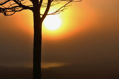 Silhouette of the tree during sunrise. Silhouette of slim the tree during sunrise with the lake at background Stock Photos