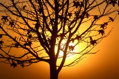 Silhouette of the tree during sunrise. Silhouette of slim the tree during sunrise with the shining sun behind the trunk Royalty Free Stock Images