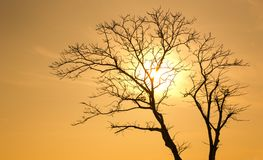 Silhouette of Tree at Sunset Royalty Free Stock Image