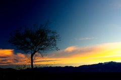Silhouette Tree in the Sunset Royalty Free Stock Image