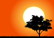 Silhouette of a tree in the sunset Stock Images