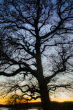 Silhouette of a tree. After sunset royalty free stock photography