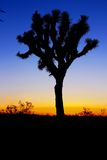 Silhouette of Tree during Sunset Royalty Free Stock Images