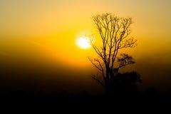 Silhouette of a tree. Silhouette of a tree on sunset background Stock Photography