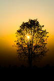 Silhouette of a tree. Silhouette of a tree on sunset background Royalty Free Stock Images