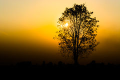 Silhouette of a tree. Silhouette tree on sunset background Royalty Free Stock Images