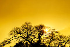 Silhouette tree with sunset Stock Photos