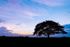 Silhouette of tree at sunset Royalty Free Stock Photography
