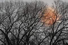 Silhouette of tree at sunset Stock Photo