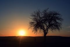 Silhouette of tree in sunset Royalty Free Stock Image