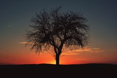 Silhouette of tree in sunset Stock Image