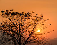 Silhouette tree at sunset Stock Photos