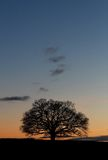 Silhouette tree sunset Stock Photography