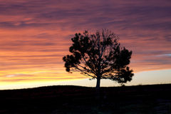 Silhouette of tree at sunset. Stock Image