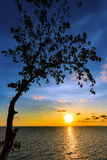 Silhouette tree with sunset over sea with colorful cloud and sky Royalty Free Stock Photos