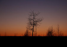 The silhouette of a tree at sunset Royalty Free Stock Images