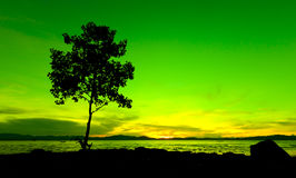 Silhouette of a tree at sunset Stock Image