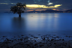 Silhouette of Tree and Sunset on silent beach Royalty Free Stock Photo