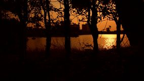 Silhouette of tree and sunset. Silhouette of tree and sunlight of sunset time with lake in a park stock video