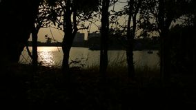 Silhouette of tree and sunset. Silhouette of tree and sunlight of sunset time with lake in a park stock video footage