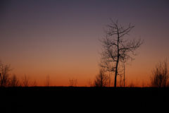 The silhouette of a tree at sunset, winter Royalty Free Stock Photos