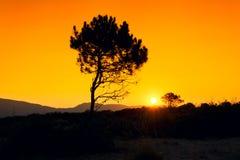 Silhouette tree sunset Royalty Free Stock Photo