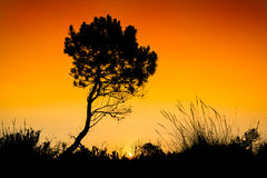 Silhouette tree sunset Stock Images