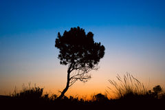 Silhouette tree sunset Royalty Free Stock Images