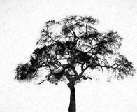 Silhouette Tree with Textured Background Stock Images