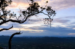 Silhouette of tree at twilight Stock Image